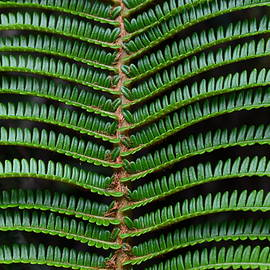 Undulating Waves of Green by Heidi Fickinger