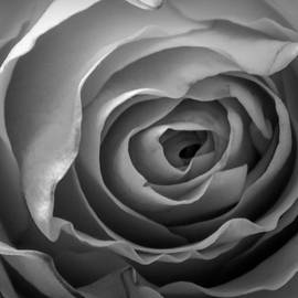 UNFOLDING - Black and White by Arlane Crump