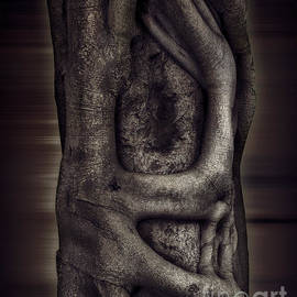 Symbiotic - Fine Art Photography By Ronna A. Shoham by Ronna A Shoham