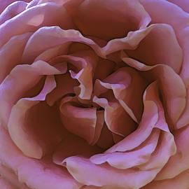 Unpicked Rose by Paula Porterfield-Izzo
