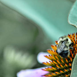 Untitled Bee One by Paul Vitko
