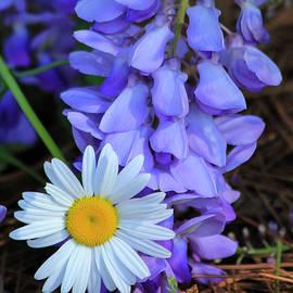 Reid Callaway - Unusual Friends Flower Art