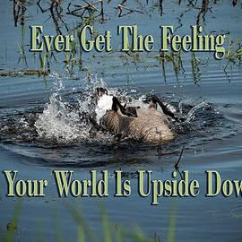Jayne Gohr - Upside Down World