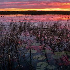 Patti Deters - Purple Sunrise with Lilypads #2