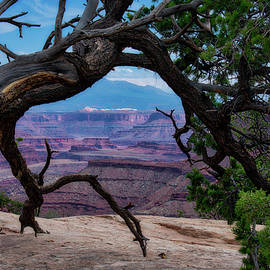 Utah Trees Canyonlands National Park 01 by Thomas Woolworth