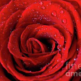 Tracy Hall - Valentine Swirl