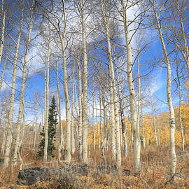 Donna Kennedy - Valley of the Aspens