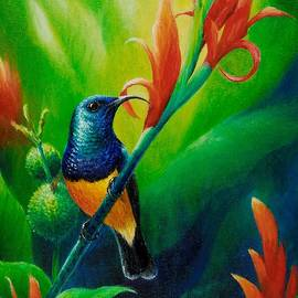 Variable Sunbird by Christopher Cox