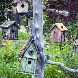 Variety Of Birdhouses Hanging On Tree In Garden by Bryan Mullennix