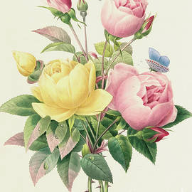 Variety of Yellow Roses and Bengal Roses - Pierre Joseph Redoute