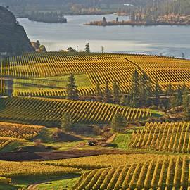 Vaseux Lake And Vineyards by Darrel Giesbrecht
