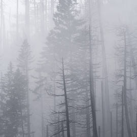 Dustin LeFevre - Veiled in Mist