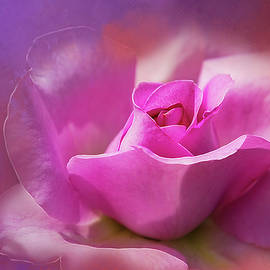 Velvet Rose by Terry Davis