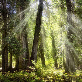 Verdant Forest by Endre Balogh
