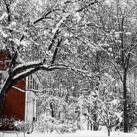 Karen Schepartz - Vermont Snow Day