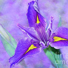 Vibrant Iris on Purple Bokeh by Kaye Menner