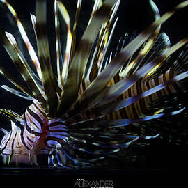 Vieques Lionfish Profile #1 by Karl Alexander