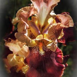Vignetted  Iris by Robert Bales