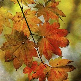 Angie Vogel - Vine Maple Leaves