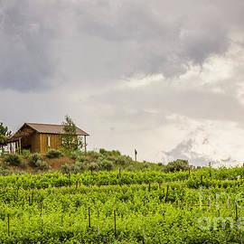 Vineyard Cabin by Jean OKeeffe Macro Abundance Art