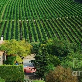 A Vineyard In Carcassonne, Occitanie by Poet's Eye