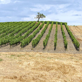 Vineyard Right Angles by Sally Weigand
