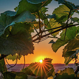 Vineyard Sunset by Framing Places