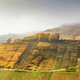 Paul MAURICE - Vineyards in Bugey mountains - France