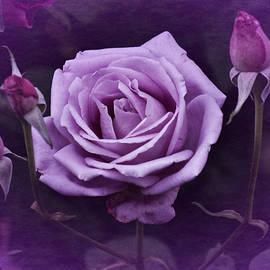 Richard Cummings - Vintage Aug Purple Rose