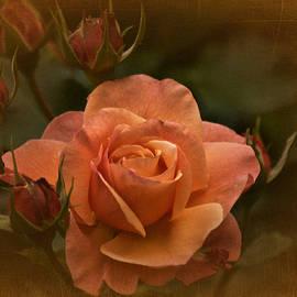 Richard Cummings - Vintage Aug Rose
