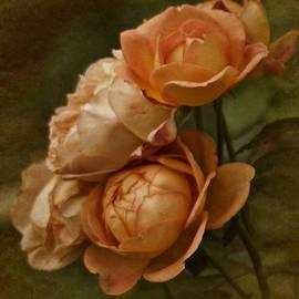 Richard Cummings - Vintage Aug Roses