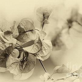 Vintage Floral by Kaye Menner