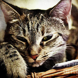 Pamela Moran - Vintage Kitties