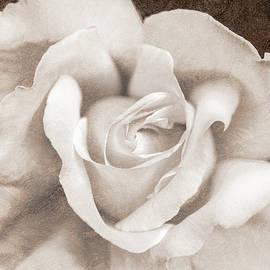 Jennie Marie Schell - Vintage Sepia Rose Flower