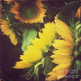 Vintage Sunflower - Yellow Happiness by Miriam Danar