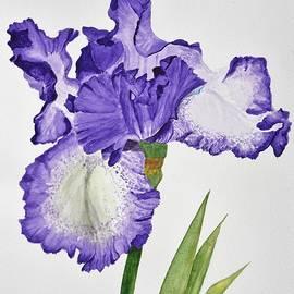 Linda Brody - Violet Iris Flower with Leaves