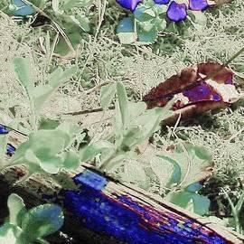 Susan Schneider - Violets