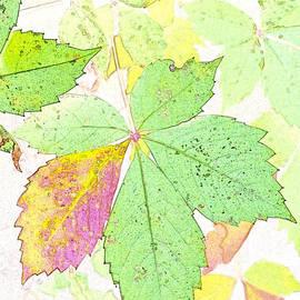 Gary Richards - Virginia Creeper Watercolor