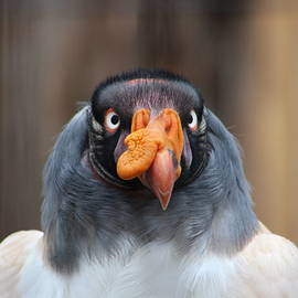 Douglas Milligan - Vulture