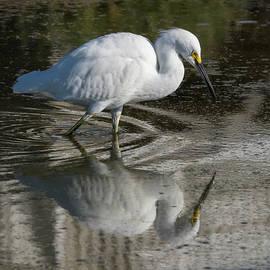Wading Egret Reflected by Bruce Frye