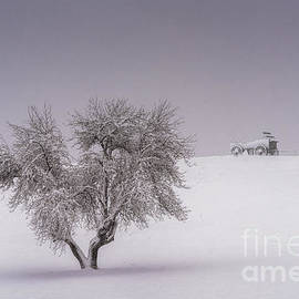 Wagon Hill Farm by Scott Thorp
