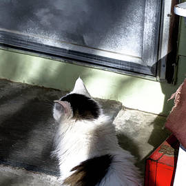 Aliceann Carlton - Waiting At The Door