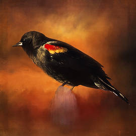 Waiting - Bird Art by Jordan Blackstone