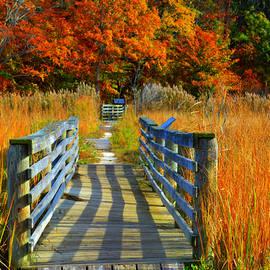 Dianne Cowen - Walk Into Fall