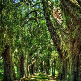 Reid Callaway - Walk With Me Avenue Of Oaks St Simons Island Golf Club Art