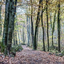 Marc Garrido - Walking into Jordan Beech Wood, Catalonia