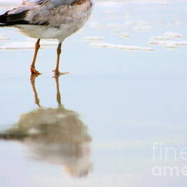 Land Sea And Sky Series Ring Billed Gull Walking Along The Beach by Angela Rath