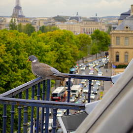 Watching Paris From Above by Marla McPherson