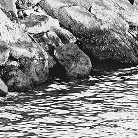 Rocky Shoreline by Carol F Austin