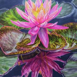 Fiona Craig - Water Lilies 17 Sunfire
